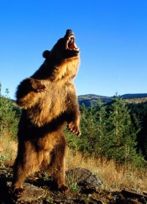 مبارزه و مقابله با خرس